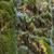 свежие · весны · зеленая · трава · капли · вертикальный · Эко - Сток-фото © vilevi