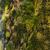 musgo · gotas · de · água · natureza · água · grama · jardim - foto stock © vilevi