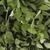 листьев · свежие · фон · зеленый · растительное · трава - Сток-фото © vinodpillai