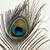 tavuskuşu · tüy · detay · renkli · yalıtılmış · beyaz - stok fotoğraf © vinodpillai