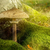 parasol · mousse · ombre · soleil - photo stock © viperfzk