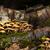grupy · grzyby · drzewo · mech · pozostawia · rodziny - zdjęcia stock © viperfzk