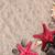 Sea shells with two red starfish and binocular stock photo © viperfzk
