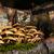 mushrooms and tree stump stock photo © viperfzk