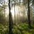 bûcheron · bois · bouleau · mains · arbre - photo stock © visdia