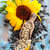 sunflower and sunflower seed stock photo © vitalina_rybakova