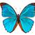青 · 蝶 · 緑色の葉 · 翼 · 目 · デザイン - ストックフォト © vitalina_rybakova
