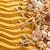 conchas · praia · poucos · praia · água · natureza - foto stock © vitalina_rybakova