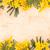 confine · cartolina · fiori · di · primavera · isolato · bianco · fiore - foto d'archivio © vitalina_rybakova