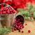 áfonya · ünnep · fények · háttér · tél · gyógyszer - stock fotó © Vitalina_Rybakova