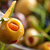 marinated olives with herbs stock photo © vitalina_rybakova