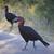 aves · grande · pico · largo · negro - foto stock © vividrange