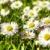 szárított · növénygyűjtemény · borsmenta · tea · közelkép · makró · szabadtér - stock fotó © vkraskouski