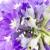 violet · bloem · schoonheid · zomer · groene · Blauw - stockfoto © vtorous