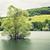 зеленый · лес · воды · дерево · весны - Сток-фото © vwalakte