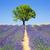 francês · panorâmico · ver · flor · paisagem - foto stock © vwalakte