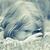 pensativo · menina · ensolarado · floresta · mulher · jovem · leitura - foto stock © vwalakte