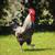 természet · madár · toll · szín · női · állat - stock fotó © vwalakte