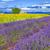 подсолнечника · Франция · цветы · природы · синий · растений - Сток-фото © vwalakte