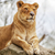 sudáfrica · retrato · hermosa · animales · frescos - foto stock © vwalakte