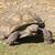 terra · tartaruga · rastejar · branco · tartaruga · animais · de · estimação - foto stock © vwalakte