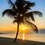 pálmafa · sziluett · naplemente · tengerpart · gyönyörű · nyáridő - stock fotó © vwalakte