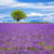 fransız · yeşil · orman · manzara - stok fotoğraf © vwalakte
