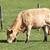 корова · глазах · области · фермы · молоко - Сток-фото © vwalakte