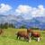 panoráma · tehenek · legelő · barna · fehér · felhők - stock fotó © vwalakte