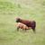 melk · veld · voedsel · baby · gras · natuur - stockfoto © vwalakte