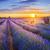 paars · lavendel · zonsondergang · Frankrijk · hemel · achtergrond - stockfoto © vwalakte