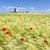szélmalom · búzamező · víz · pumpa · kút · központi - stock fotó © vwalakte
