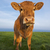 vertical portrait of brown cow stock photo © vwalakte