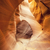 view of famous antelope canyon stock photo © vwalakte