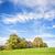 chêne · vert · prairie · ciel · lumière · nuages - photo stock © w20er