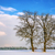 two trees in winter landscape stock photo © w20er
