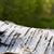 izolált · ezüst · nyírfa · fehér · fa · fa - stock fotó © w20er