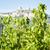 toscana · paisagem · belo · hills · campos - foto stock © w20er