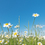 美しい · 草 · 庭園 · 詳細 · 花 · 春 - ストックフォト © w20er