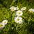 grupy · kwitnąć · łące · kwiaty · wiosną · charakter - zdjęcia stock © w20er