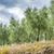 velden · Toscane · hemel · weg · wijn · natuur - stockfoto © w20er