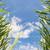 su · çiçek · çim · tohumları - stok fotoğraf © w20er