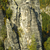 scenery in saxon switzerland stock photo © w20er