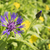 abelha · rocha · natureza · animal · mel · inseto - foto stock © w20er