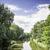 落葉性の · 木 · 葉のない · ツリー · 白 - ストックフォト © w20er