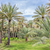 palms · lama · imagem · Omã · céu · paisagem - foto stock © w20er