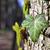 bluszcz · drzewo · kory · charakter · liści · tle - zdjęcia stock © w20er