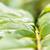verde · água · superfície · da · água · cópia · espaço · natureza - foto stock © w20er