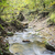 stream in forest stock photo © w20er