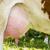 mucca · campo · primo · piano · erba · natura · ritratto - foto d'archivio © w20er